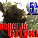 5% тверских слухов