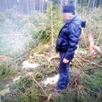 Бологое: незаконно рубили лес